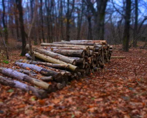 autumn-bark-blurr-close-up-282373