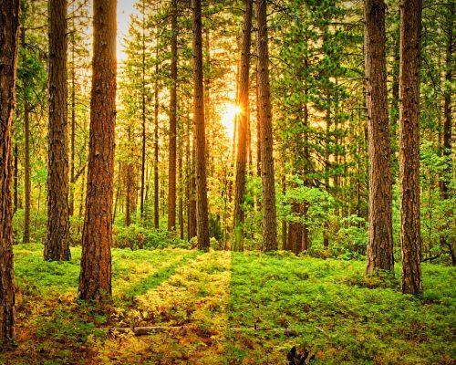 green-trees-675949