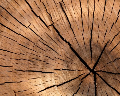 wood-nature-pattern-texture-40973